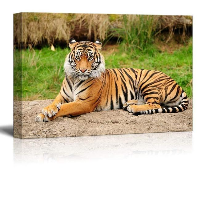 Canvas Wall Art - A Royal Bengal Tiger in the Wild (16