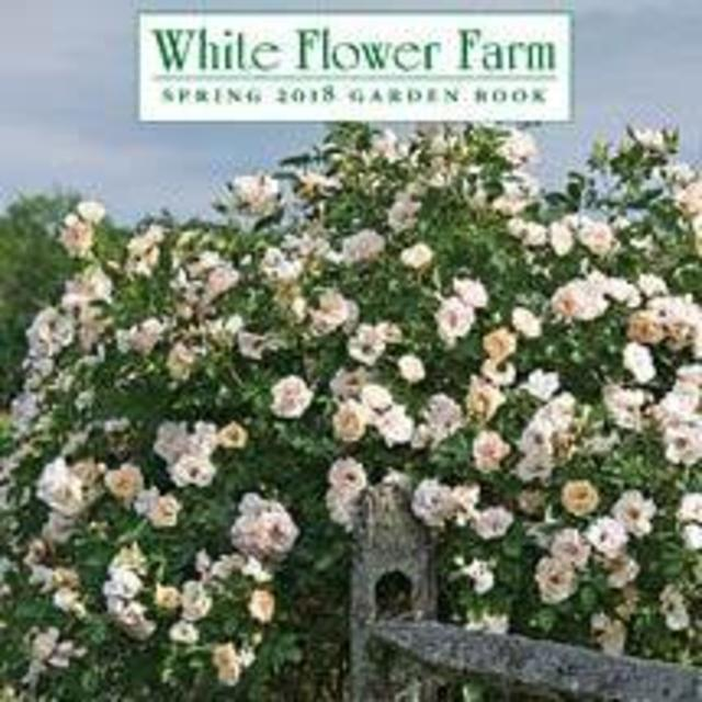 Molly and kevins wedding website white flower farm gift certificate for garden trees and shrubs mightylinksfo